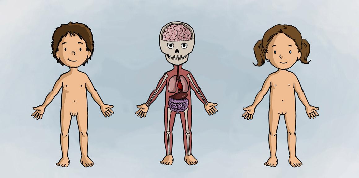 Dentro del cuerpo humano | Contenidos educativos digitales