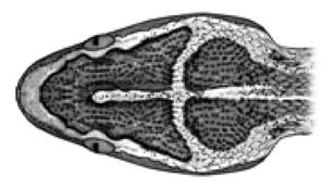 crucera-1