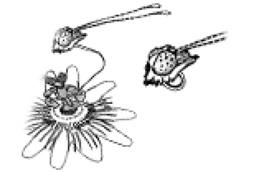 mariposa-espejito-3