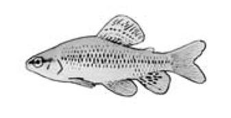 mariposita-1