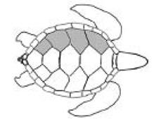 tortuga-verde-2